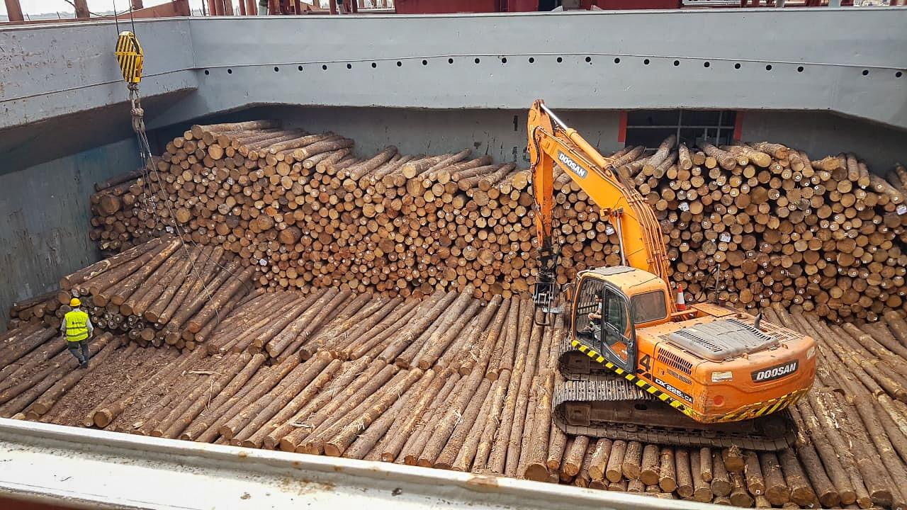 Madereros advierten que exportar rollizos afecta a la economía y el ambiente