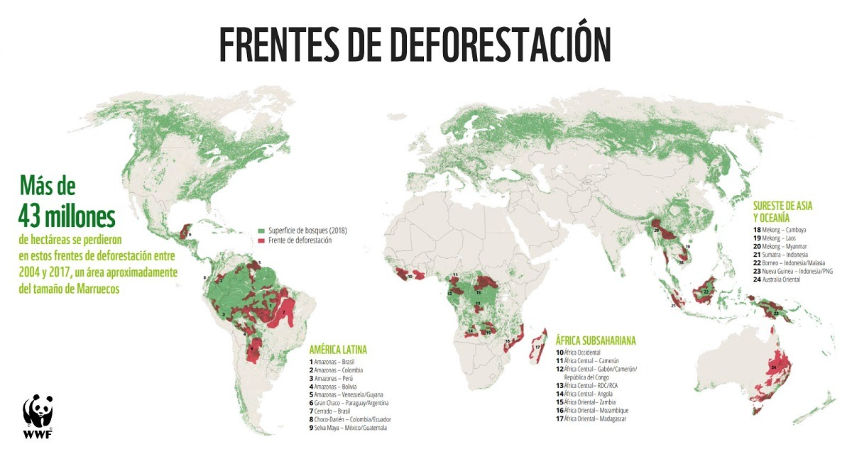 El Gran Chaco, uno de los principales frentes de deforestación a escala global, según nuevo reporte de WWF