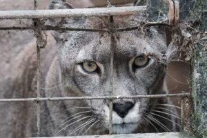 Ambiente solicitó al zoológico de Batán documentación del plantel faunístico