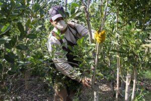Nación envía subsidios para casi 600 tareferos correntinos
