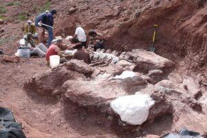 20-01-2021 Neuquén: El hallazgo de los restos fósiles de un ejemplar de titanosaurio en Neuquén, que podría ser el dinosaurio más grande alguna vez encontrado, reveló la existencia de un linaje previamente desconocido y brindó nueva información sobre la evolución de la masa corporal de los dinosaurios, aseguran los expertos que lo estudiaron. Foto: telam/cgl