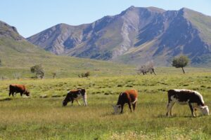 Pastizales del futuro: ganadería con servicios ambientales