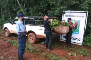 Más de 1800 kilos de yerba mate fueron recuperados por la Policía