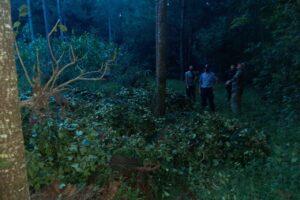 Evitaron robo de yerba en San Pedro y detectaron un punto ilegal de acopio en San Vicente