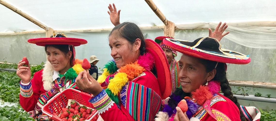 La agricultura en América Latina, el desarrollo económico y su impacto ambiental