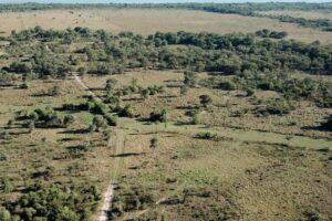 Aprobaron la construcción de la primera planta de celulosa en Paraguay