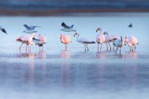 Impulsan la creación del parque nacional más grande del país en la laguna de Mar Chiquita