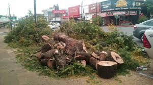 El irracional arboricidio sistemático que aqueja a Misiones