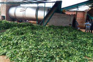Comenzó a funcionar nuevo secadero de yerba mate en Fracrán