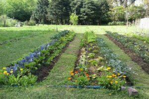 Huerta: siete consejos para producir en otoño-invierno