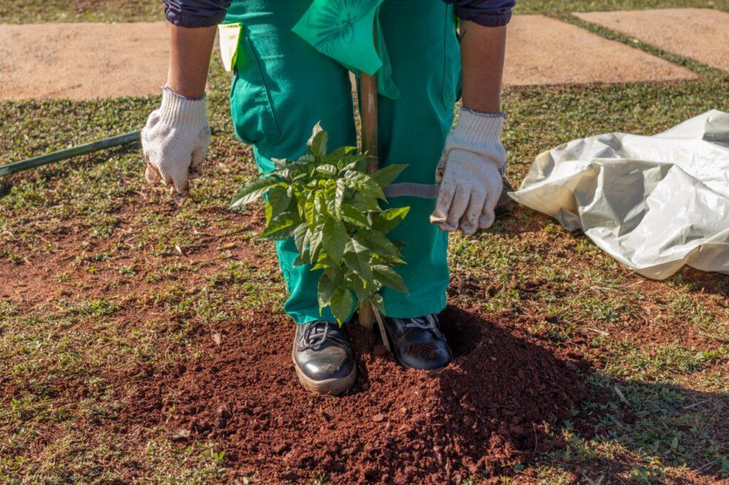 El Municipio plantó más de 1800 árboles durante el año
