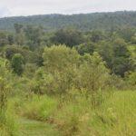 Incorporan 177 nuevas hectáreas al Sistema de Áreas Naturales Protegidas de Misiones